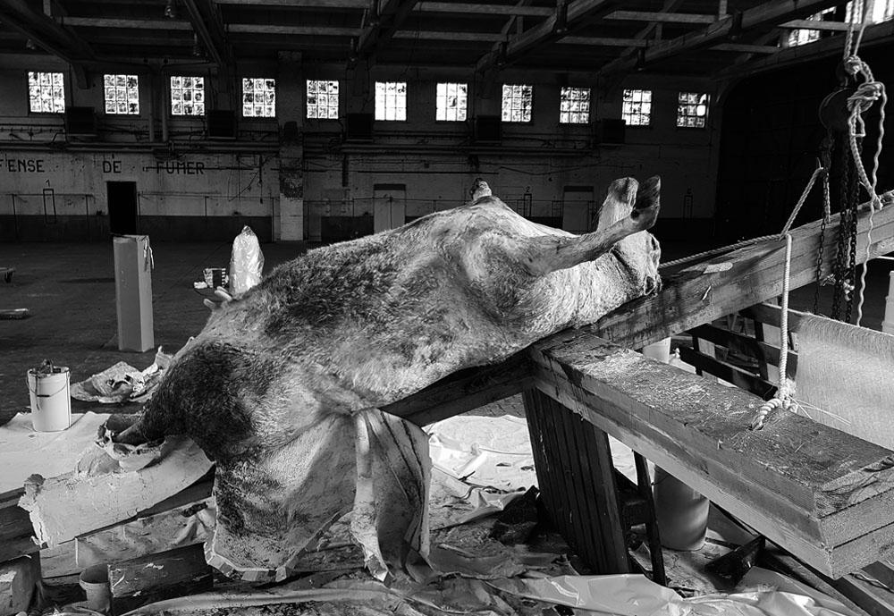 Blasphème et art dégénéré : une vache crucifiée dans une église – Des catholiques réagissent