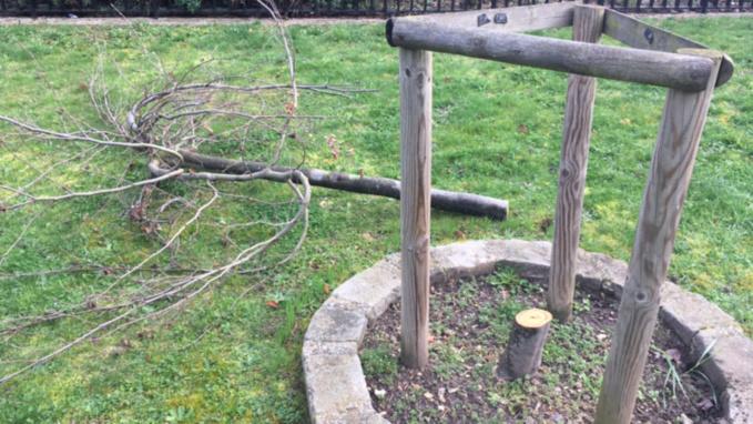 Hécatombe d'arbres de la laïcité dans les Yvelines