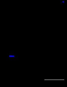 MCI-numero-66