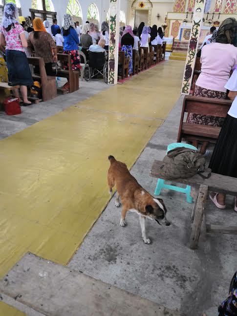 Reportage – La Mission Rosa Mystica 2019 a débuté aux Philippines
